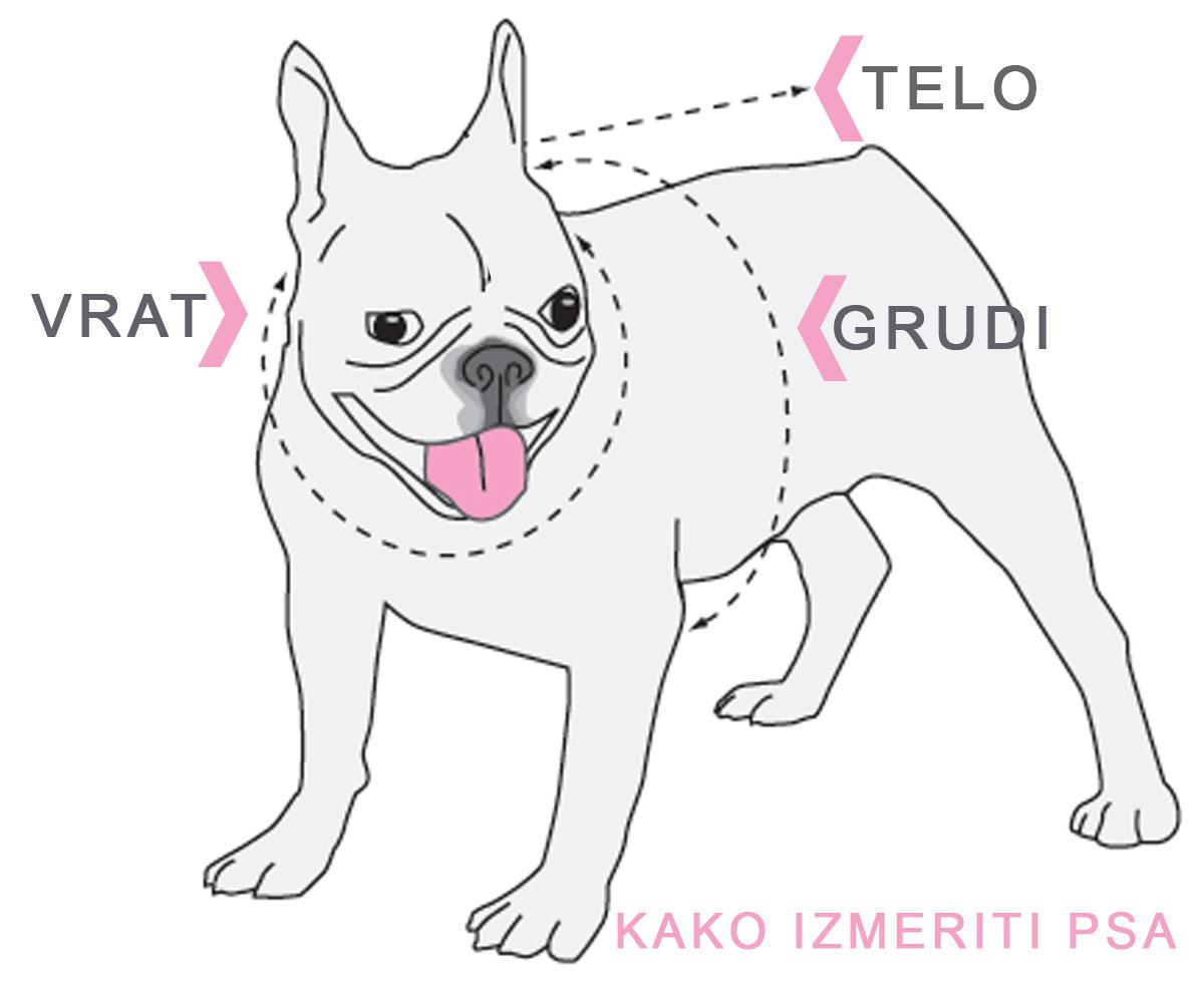 kako-izmeriti-psa